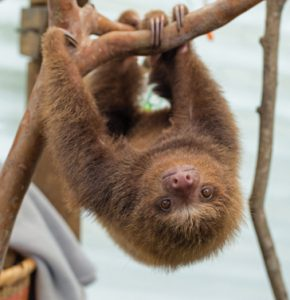 World Animal Protection - Sloth